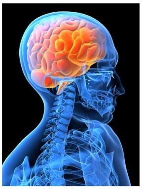 Body-brain-mind